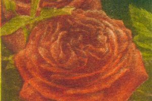 ROSA PLENA. Grabado (Mezzotinta 22 x 9,5 cm). 2000