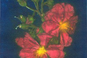 AMAGANTE. Grabado (Mezzotinta 20 x 20 cm). 2005