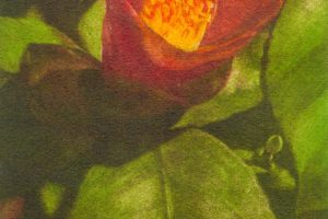 CAMELIA TEMPRANA. Grabado (Mezzotinta 24 x 12 cm). 2002