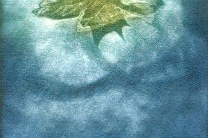 FOLLA DE AUGA. Grabado (Mezzotinta 15 x 10 cm). 2004