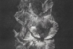 GLADIOLO. Grabado (Mezzotinta, 25 x 15 cm). 2003