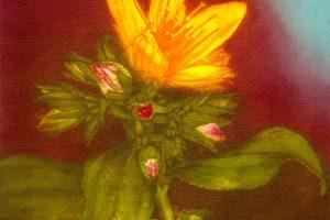 HIPÉRICO. Grabado (Mezzotinta 20 x 20 cm). 2005