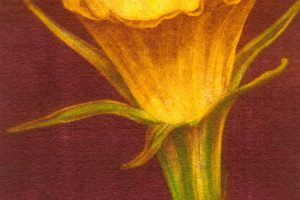 NARCISO. Grabado (Mezzotinta 24 x 12 cm). 2002