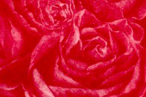 ROSA FÚLGIDA. Grabado (Mezzotinta, 10 x 10 cm). 2005